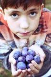 Мальчик с пригорошней зрелых голубых слив Стоковое Изображение