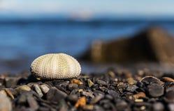 Мальчишка моря на пляже. Стоковые Фото