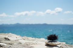 Мальчишка моря на утесе с морем в предпосылке Стоковая Фотография RF