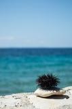 Мальчишка моря на утесе с морем в предпосылке Стоковые Изображения RF