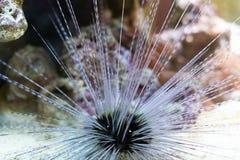 Мальчишка моря Стоковое фото RF