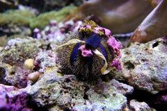 Мальчишка моря Стоковое Фото