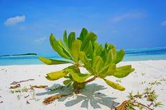 Мальдивские острова Стоковое Изображение