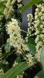 Малюсенькие белые цветки Стоковое Фото