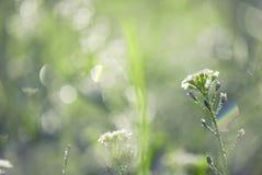 Малюсенькие цветок весны и роса утра стоковые фото