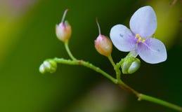 Малюсенький цветок Стоковые Фотографии RF