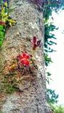 Малюсенький цветок стоковое фото rf