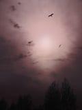 мглистое небо Стоковые Фото
