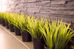 Мебель при малые вазы содержа склонность травы против wa Стоковые Фотографии RF
