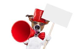 Мегафон продажи собаки Стоковое Фото