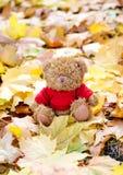 Медведь в листьях стоковое фото