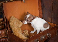 медведь любит игрушечный щенка Стоковая Фотография RF