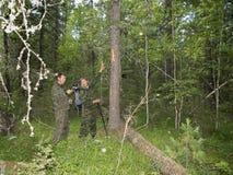 Медведь меток когтя Стоковые Фотографии RF