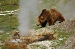 Медведь на гейзере Стоковые Изображения