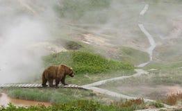 Медведь на гейзере Стоковое фото RF