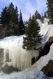 медведь падает озеро льда Стоковые Фото