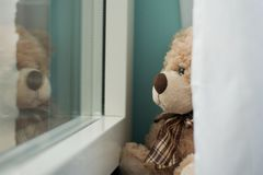 Медведь смотря вне окна на снеге стоковая фотография rf