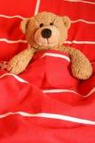 медведь сонный стоковая фотография