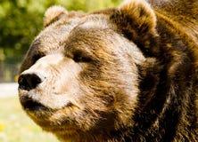 медведь счастливый стоковое изображение
