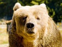 медведь счастливый стоковое изображение rf
