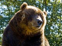 медведь счастливый стоковые изображения