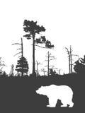 медведь иллюстрация штока