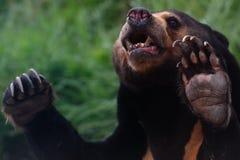 медведь Стоковые Фото