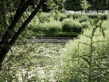 Медитативный взгляд пруда покрытого с лилиями воды стоковая фотография rf