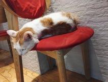 Медитативный кот на стуле стоковое изображение rf