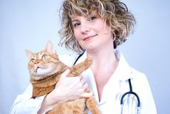 медицинский сь ветеринар Стоковое Изображение