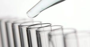 Медицинское лабораторное исследование, пипетка капает прозрачные химикаты в пробирки акции видеоматериалы