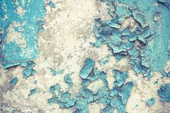 Медленная ползучесть улиток один за другим Улитки на светлой предпосылке Стоковое Фото