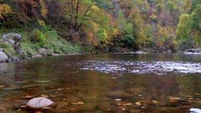Медленное двигая река бежать через осень покрасило промоину деревьев в Шотландии акции видеоматериалы