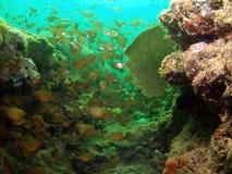 медные метельщики моря вентилятора Стоковые Изображения