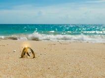 Медовый месяц на тропическом острове, 2 обручальных кольцах и искре стоковое изображение