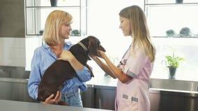 Медсестра cheking вверх по ушам барсук-собак немца стоковое фото