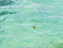 Медуза в море Стоковые Фото