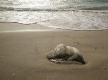 Медуза помытая на берег Стоковая Фотография