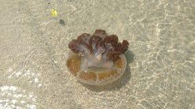 медузы стоковые изображения
