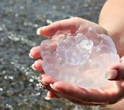 Медузы моря уловленные морем стоковые изображения