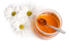мед маргариток Стоковая Фотография RF