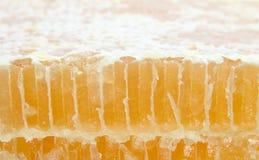 мед отрезока гребня стоковая фотография