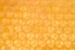 мед предпосылки Стоковое Изображение