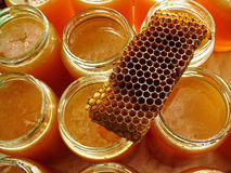 мед предпосылки Стоковые Изображения