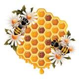 мед принципиальной схемы флористический иллюстрация штока