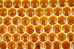 Мед пчелы в макросе сота Стоковое Фото