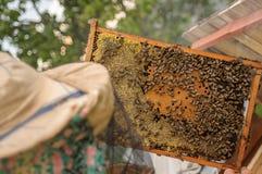 Мед пчелы хорош для здоровья, и имеет много витаминов Стоковое Изображение RF