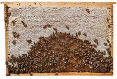 мед рамок Стоковая Фотография RF