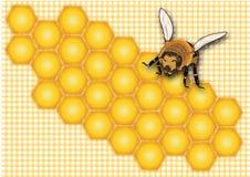 Мед, сот, ярлык меда, ярлык опарника меда, лето, насекомое, желтая пчела, помадка, предпосылка меда, иллюстрация штока