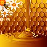 мед Стоковые Фотографии RF